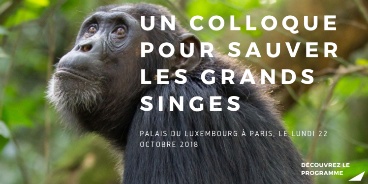 Colloque des grands singes (1).png